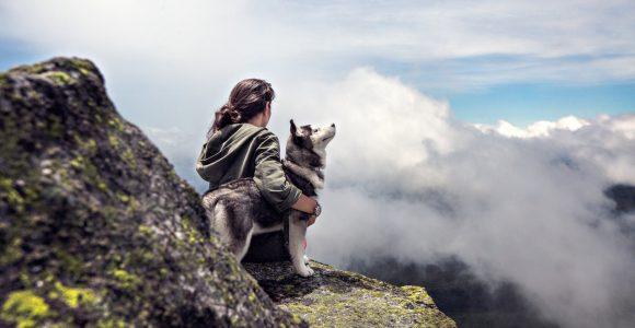 Hund som nyter utsikten